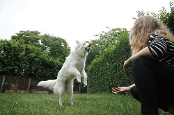 garde d'animaux pet sitting caen ouistreham